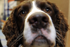 Police sniffer dog Barney, with his handler PC Claire Todd wgrp0162h13